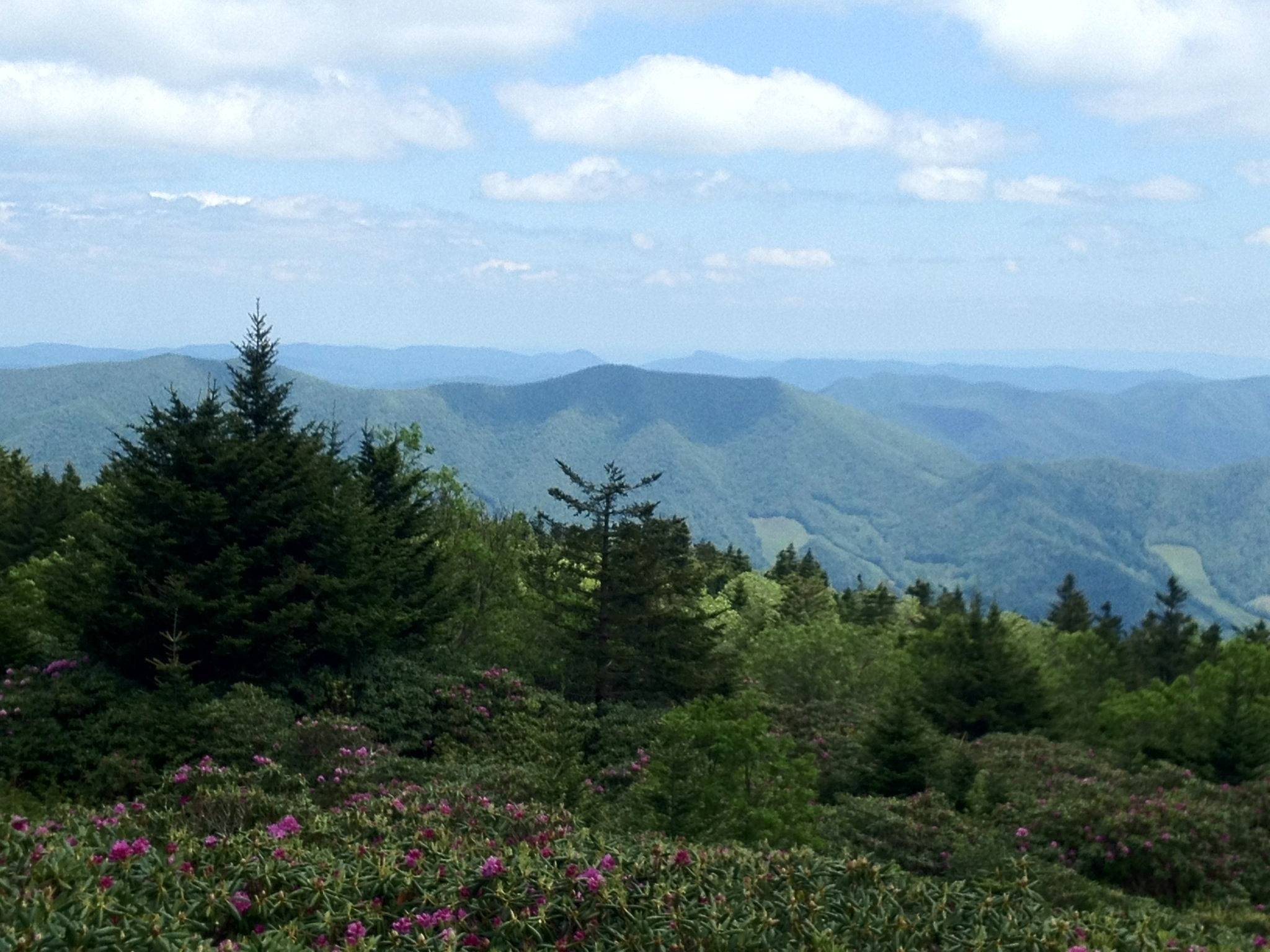 roan mountain Mark your calendar for a great time to get out of your cabin an on the mountain february 15, saturday, is an one day naturalists' rally by the friends of roan mountain.