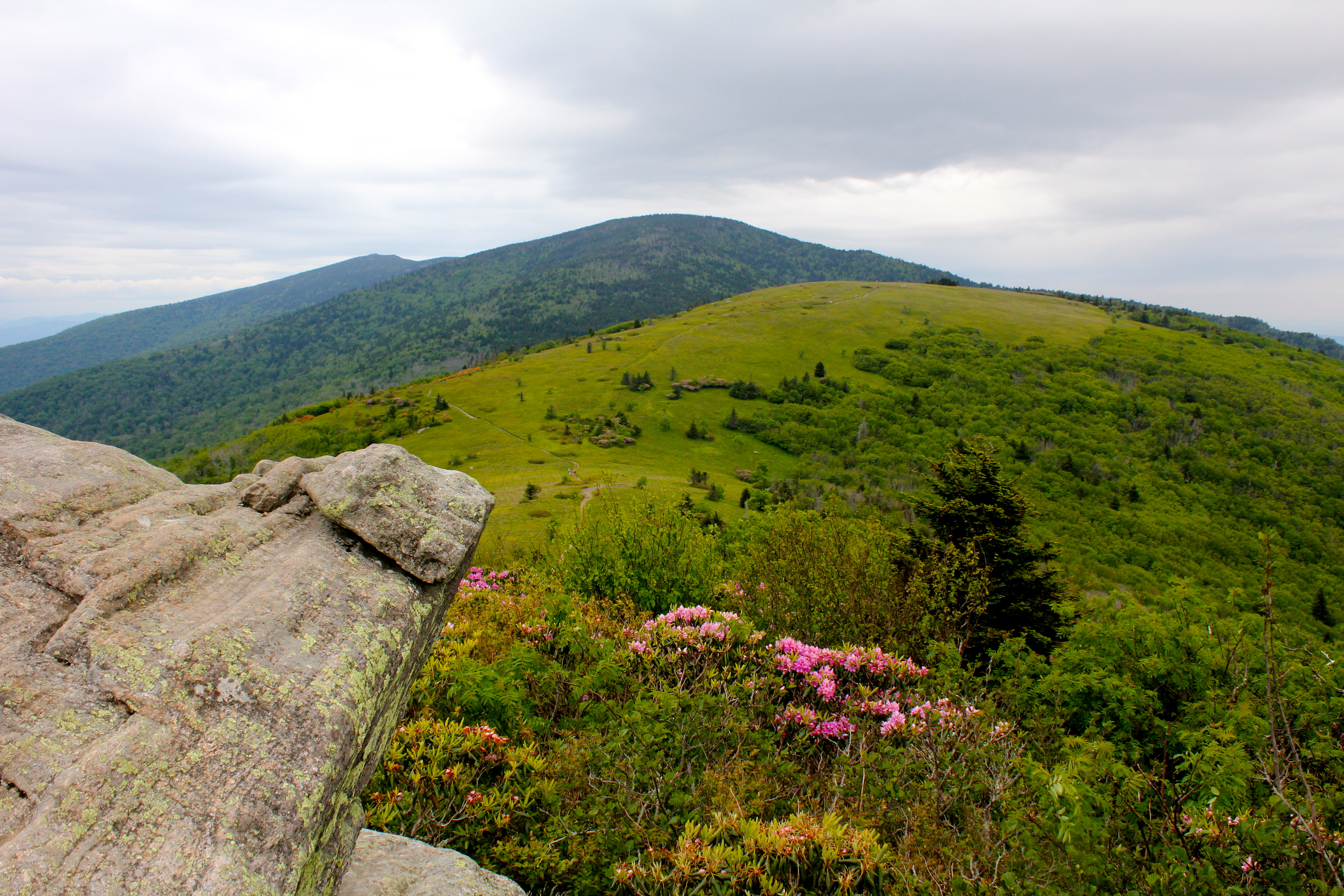 roan mountain A jewel of nature nature's hand designed a special feature for visitors of the pisgah national forest of nc and cherokee national forest of tn: roan mountain, a 6,285-foot ridge straddling.